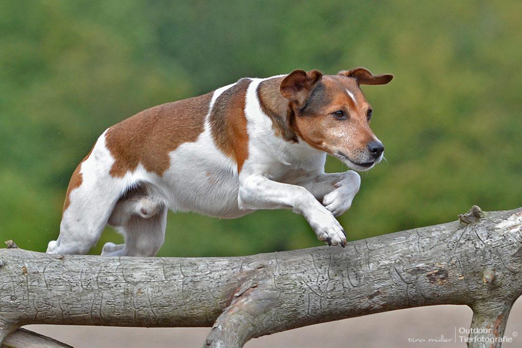 hunde_bewegung12