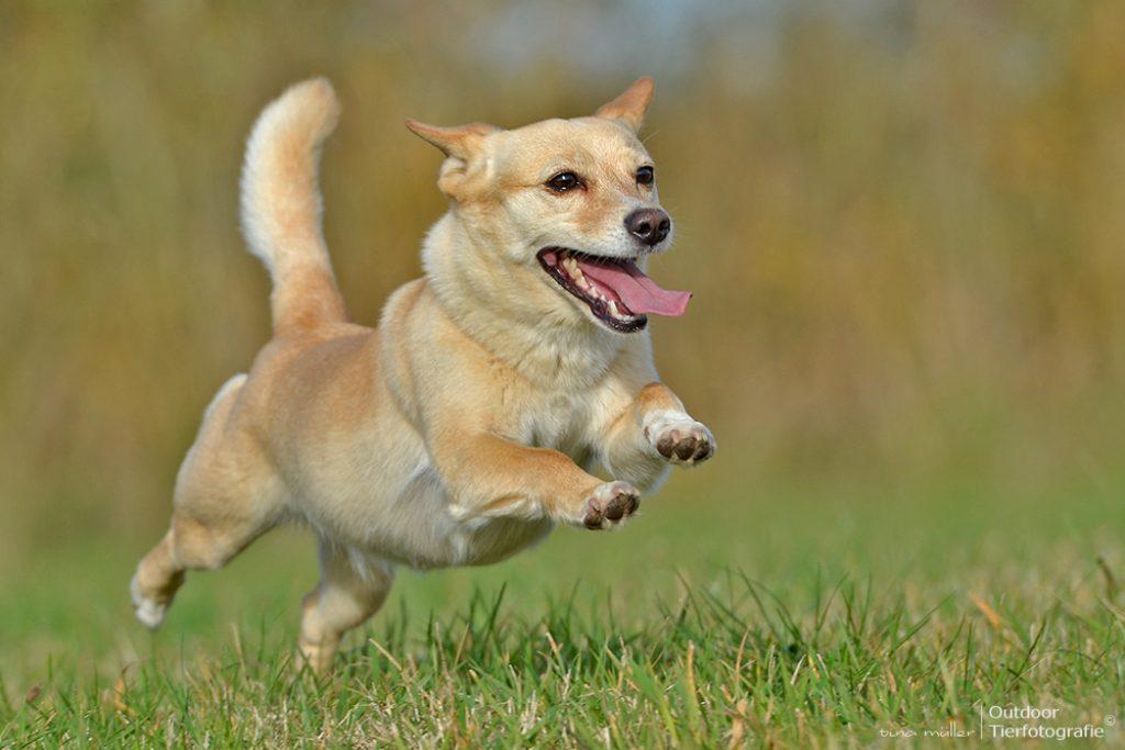 hunde_bewegung9